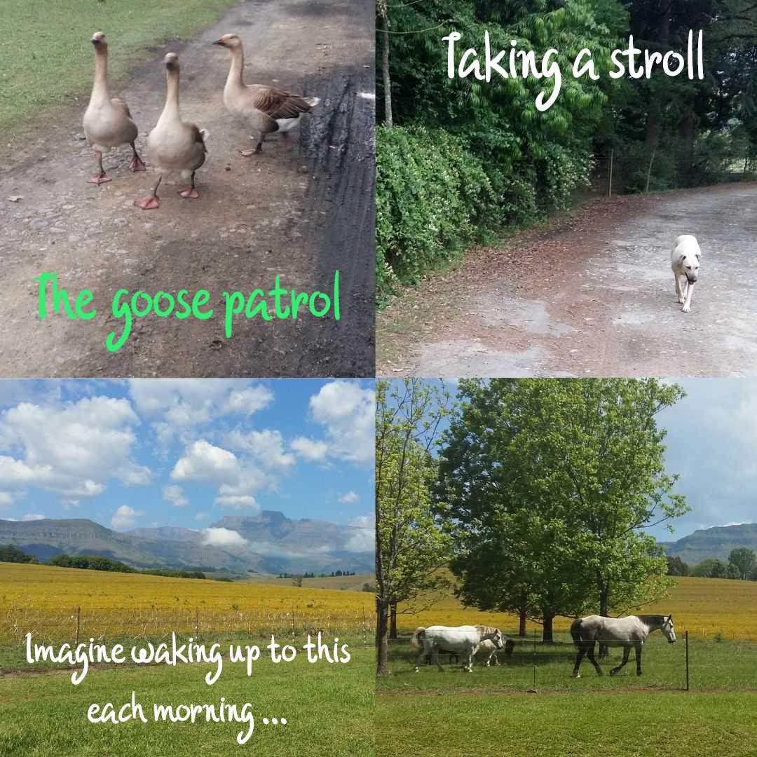 Rural scenes from Mountain Splendour in the KZN Midlands that inspired Meg Chronis's first novel