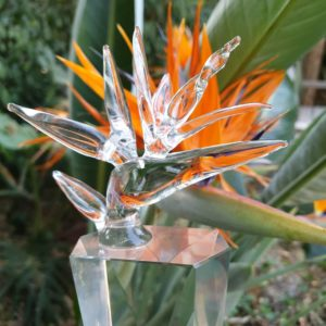 ROSA Strelitzia Award trophy set infront of real strelitzia flower